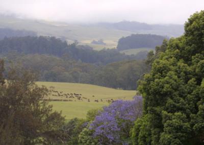 Front-1_Jacaranda_Landscape